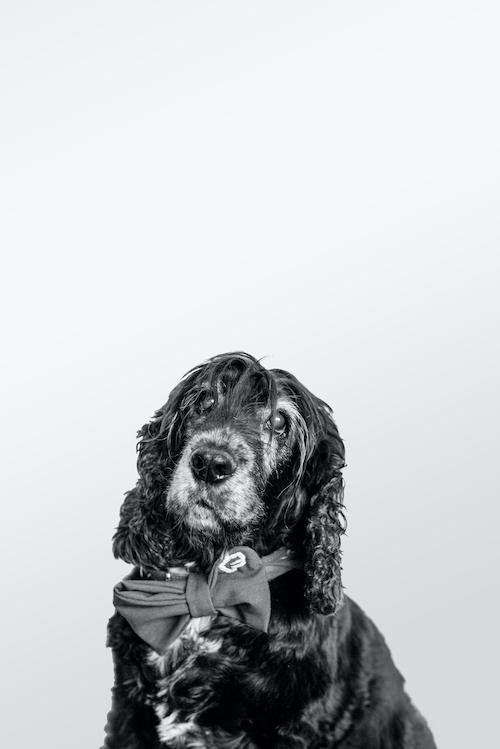 Bürohund Marla