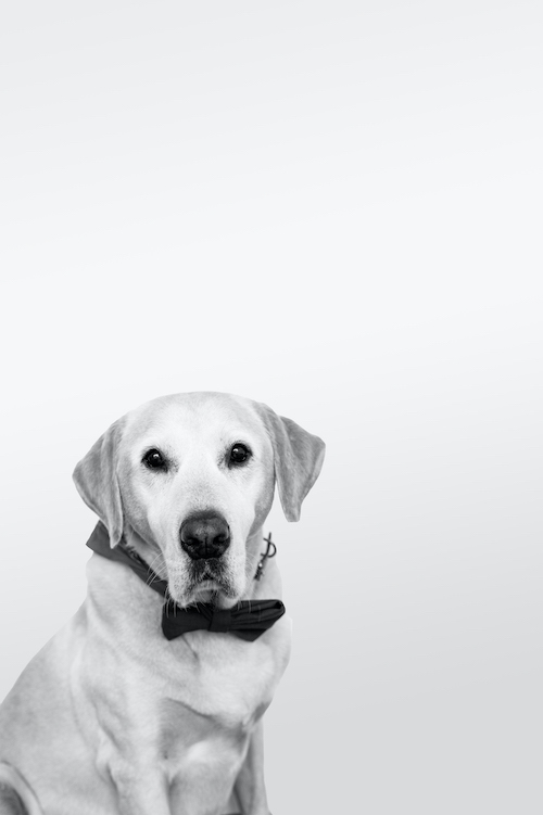 Bürohund Tucker